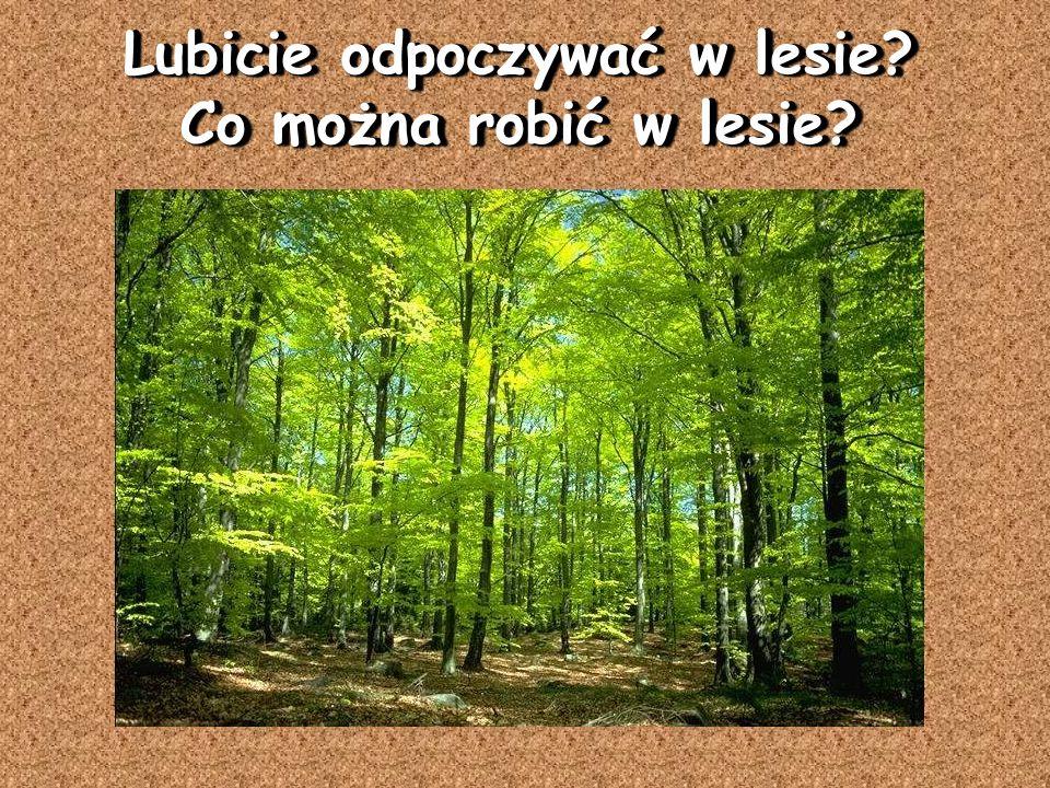 Lubicie odpoczywać w lesie Co można robić w lesie