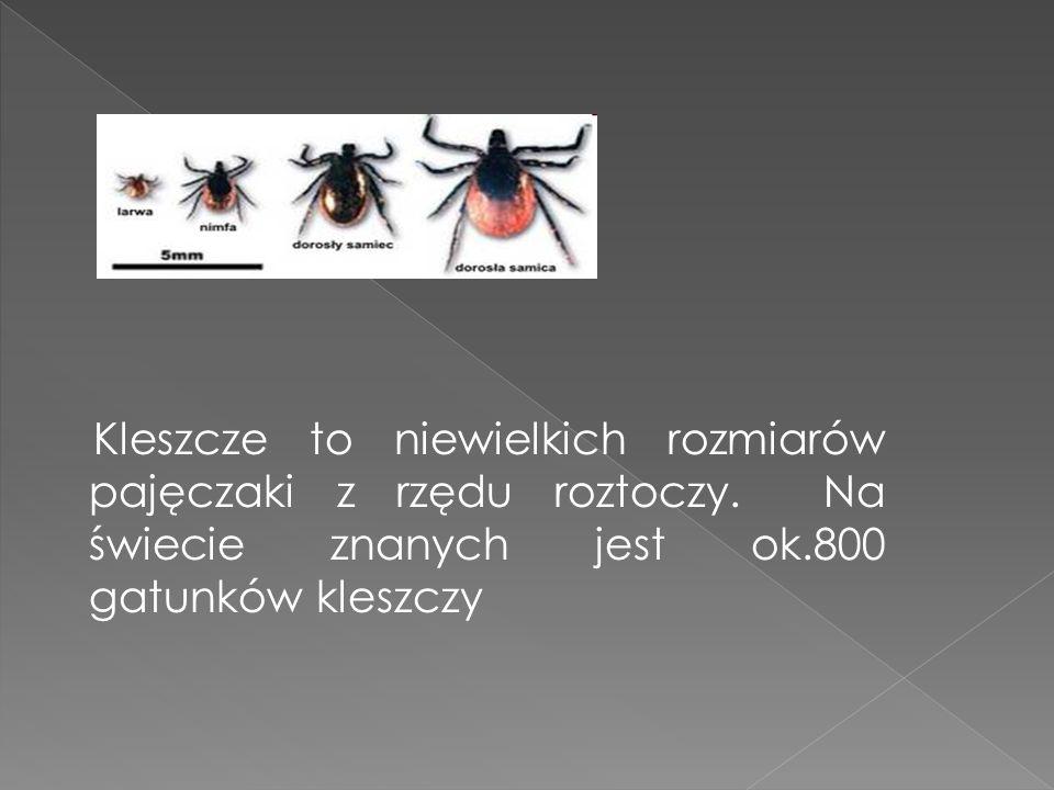 Kleszcze to niewielkich rozmiarów pajęczaki z rzędu roztoczy