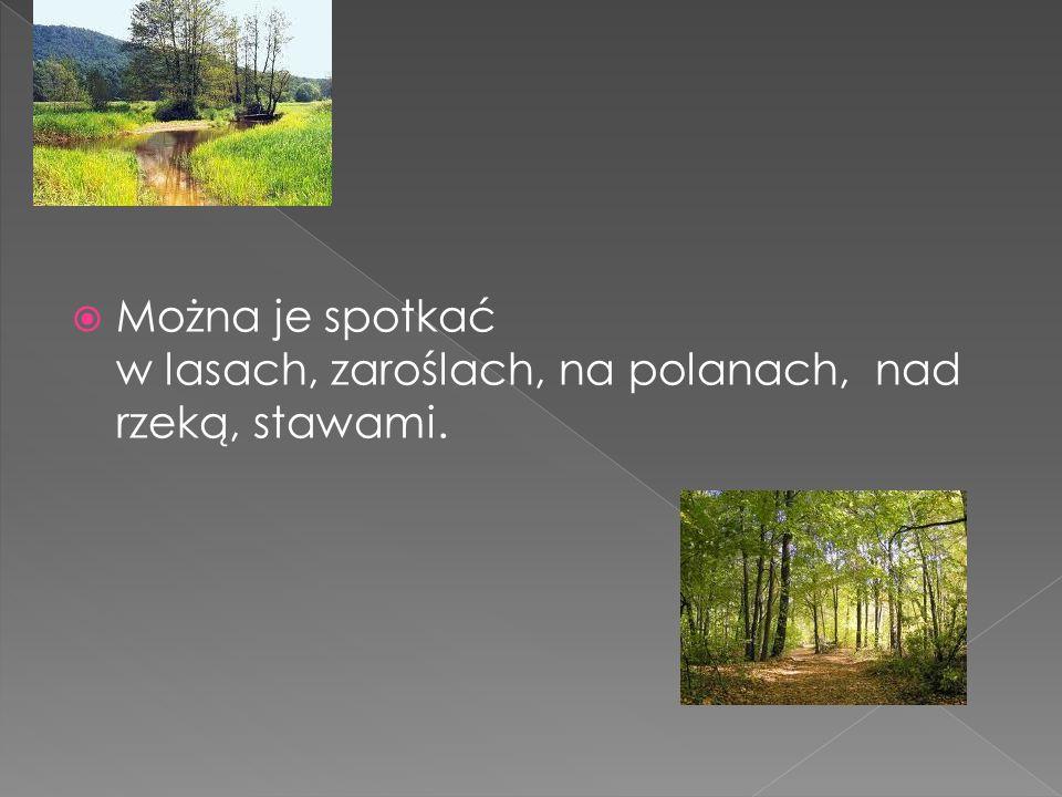 Można je spotkać w lasach, zaroślach, na polanach, nad rzeką, stawami.