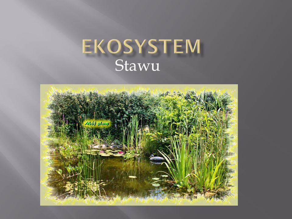 Ekosystem Stawu