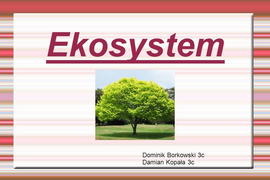 Ekosystem Dominik Borkowski 3c Damian Kopała 3c