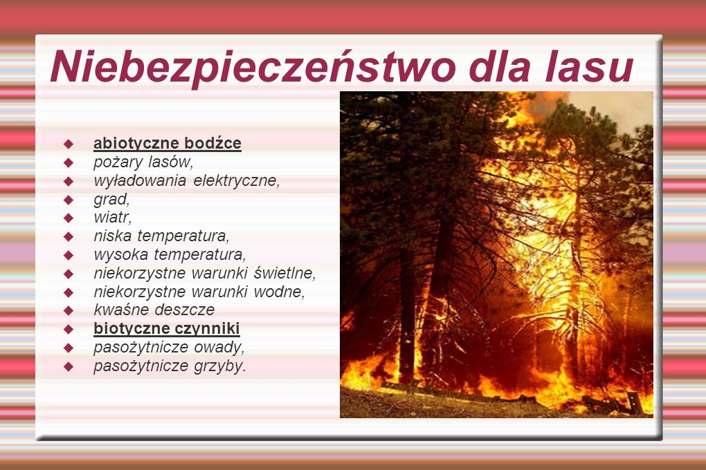 Niebezpieczeństwo dla lasu