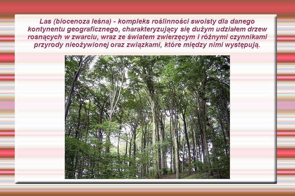 Las (biocenoza leśna) - kompleks roślinności swoisty dla danego kontynentu geograficznego, charakteryzujący się dużym udziałem drzew rosnących w zwarciu, wraz ze światem zwierzęcym i różnymi czynnikami przyrody nieożywionej oraz związkami, które między nimi występują.
