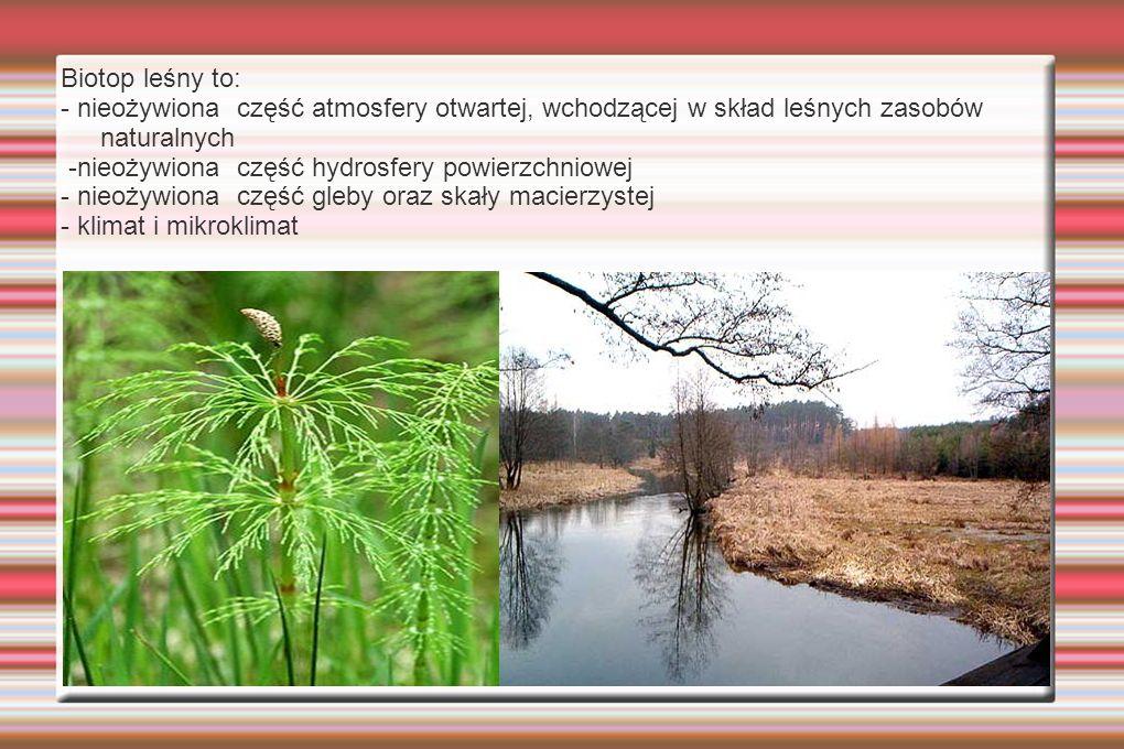 Biotop leśny to: - nieożywiona część atmosfery otwartej, wchodzącej w skład leśnych zasobów naturalnych.