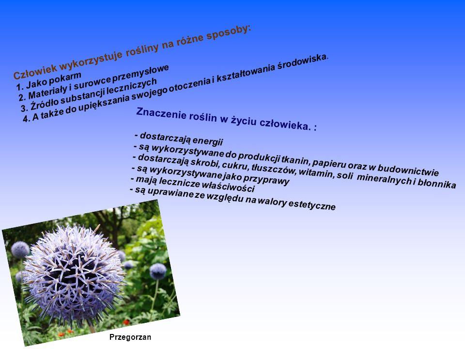 Znaczenie roślin w życiu człowieka. :