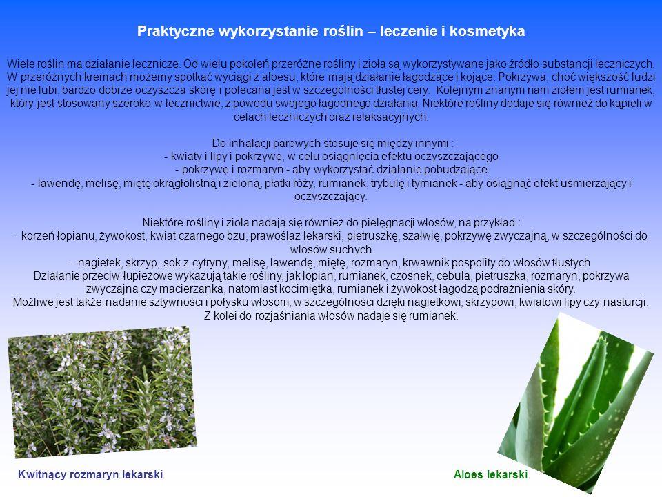 Praktyczne wykorzystanie roślin – leczenie i kosmetyka