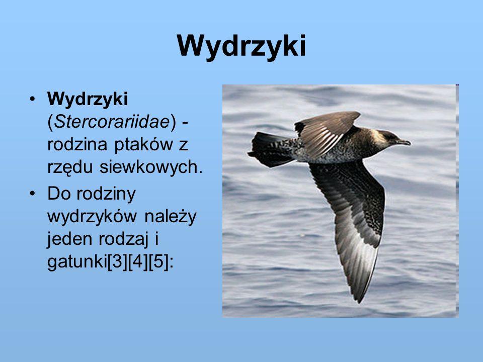 Wydrzyki Wydrzyki (Stercorariidae) - rodzina ptaków z rzędu siewkowych.