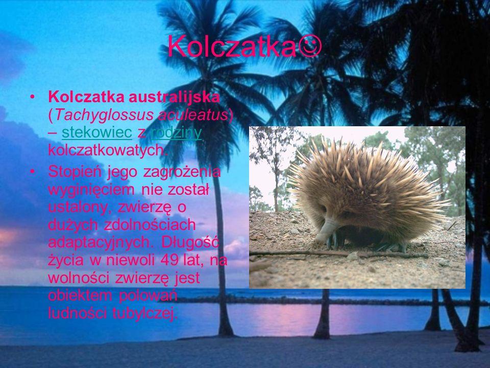 Kolczatka Kolczatka australijska (Tachyglossus aculeatus) – stekowiec z rodziny kolczatkowatych.