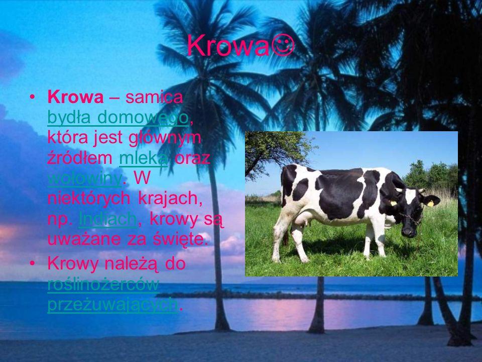 Krowa Krowa – samica bydła domowego, która jest głównym źródłem mleka oraz wołowiny. W niektórych krajach, np. Indiach, krowy są uważane za święte.