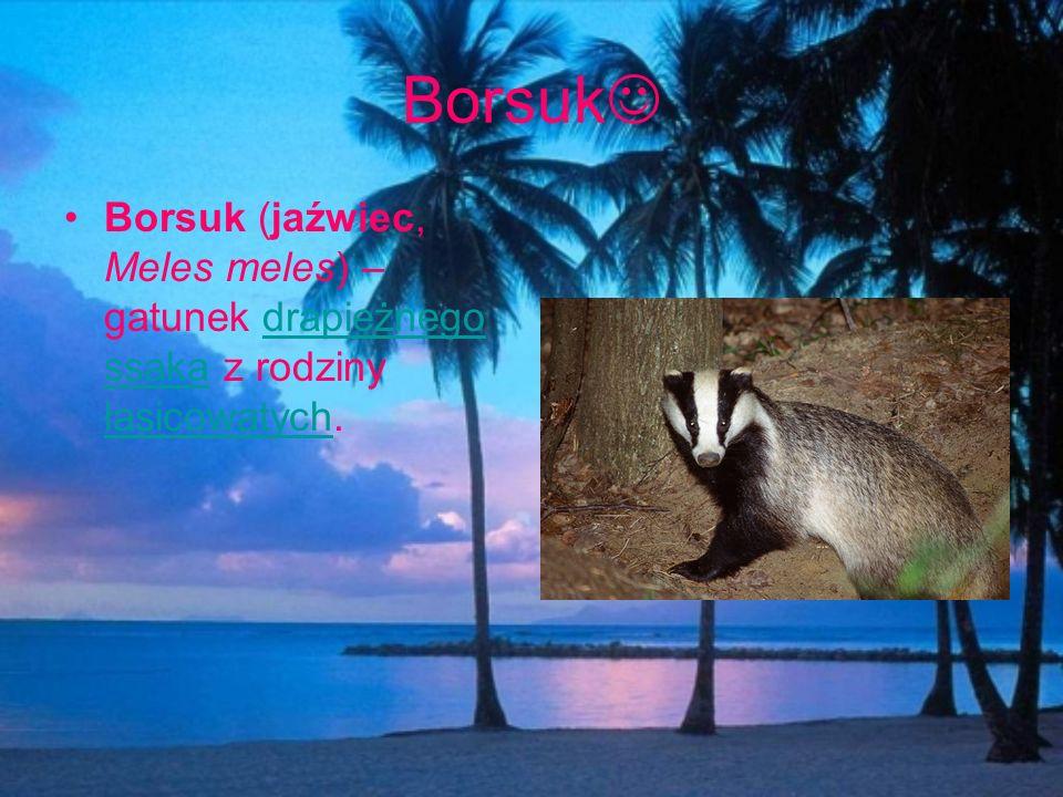 Borsuk Borsuk (jaźwiec, Meles meles) – gatunek drapieżnego ssaka z rodziny łasicowatych.
