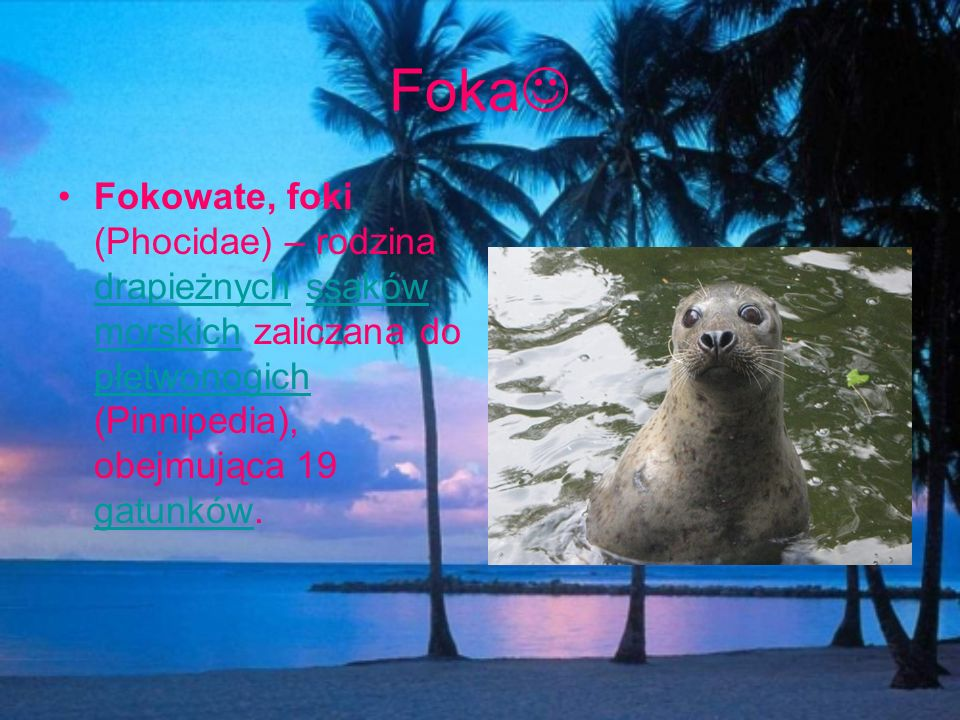 Foka Fokowate, foki (Phocidae) – rodzina drapieżnych ssaków morskich zaliczana do płetwonogich (Pinnipedia), obejmująca 19 gatunków.