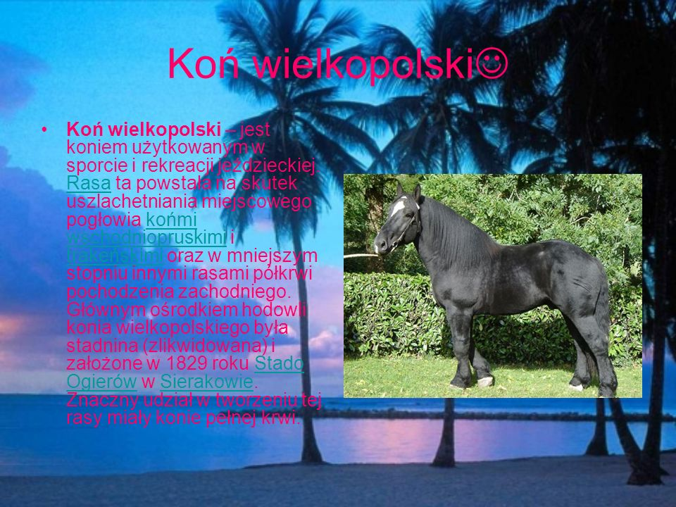 Koń wielkopolski
