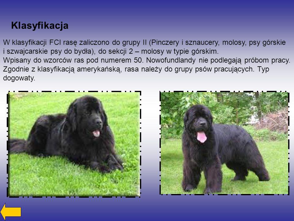 Klasyfikacja W klasyfikacji FCI rasę zaliczono do grupy II (Pinczery i sznaucery, molosy, psy górskie.