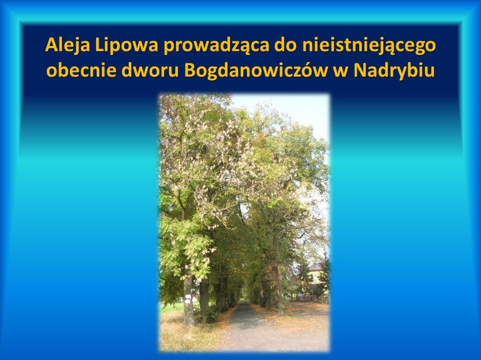 Aleja Lipowa prowadząca do nieistniejącego obecnie dworu Bogdanowiczów w Nadrybiu
