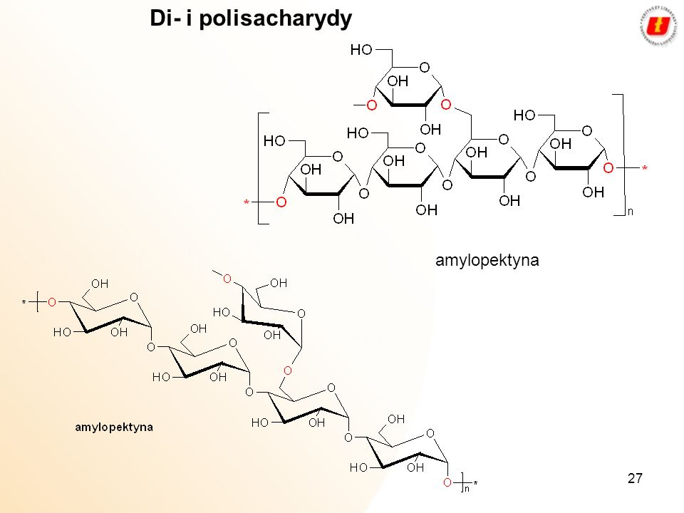 Di- i polisacharydy amylopektyna