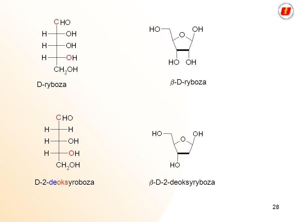 b-D-ryboza D-ryboza D-2-deoksyroboza b-D-2-deoksyryboza