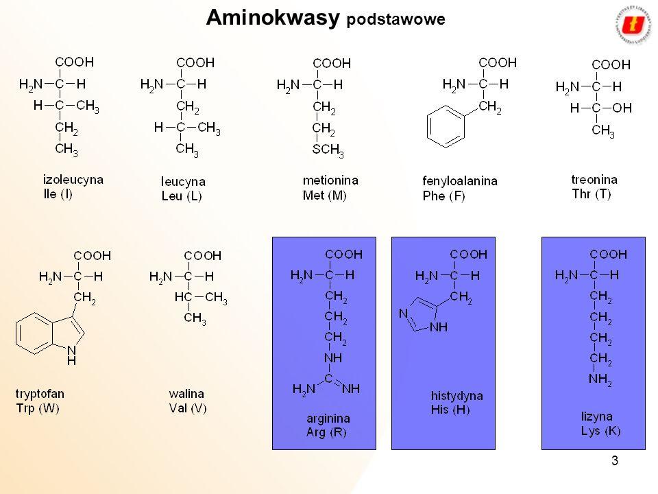 Aminokwasy podstawowe