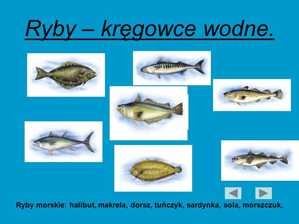Ryby – kręgowce wodne. Ryby morskie: halibut, makrela, dorsz, tuńczyk, sardynka, sola, morszczuk,