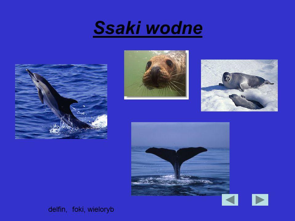 Ssaki wodne delfin, foki, wieloryb