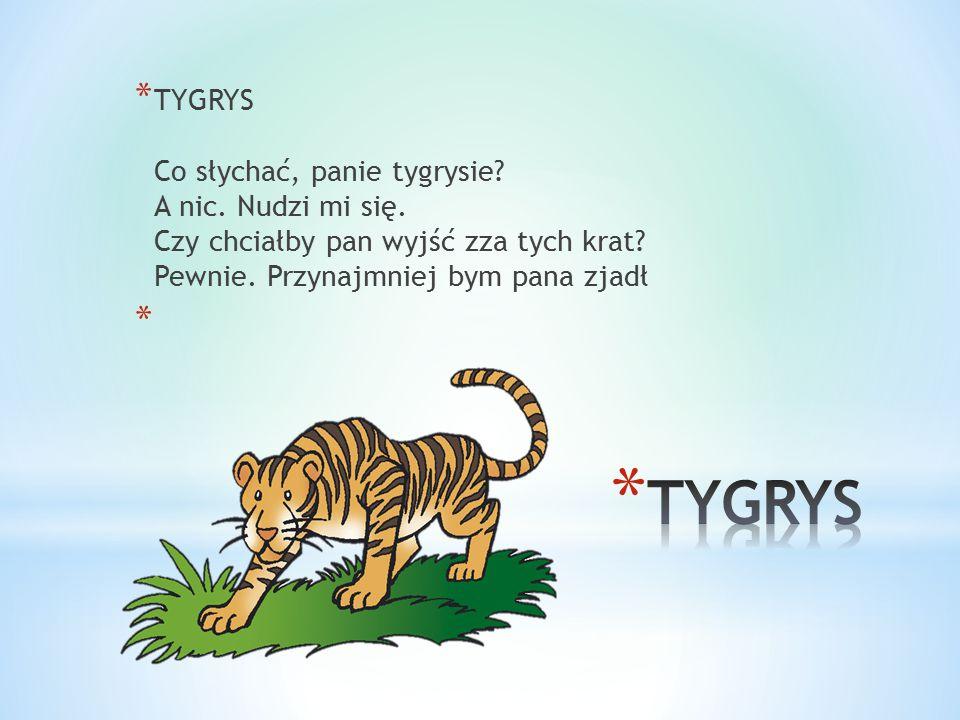 TYGRYS Co słychać, panie tygrysie. A nic. Nudzi mi się