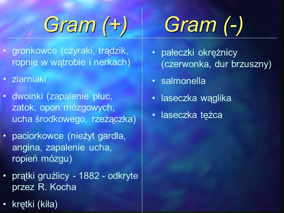 Gram (+) Gram (-) gronkowce (czyraki, trądzik, ropnie w wątrobie i nerkach) ziarniaki.