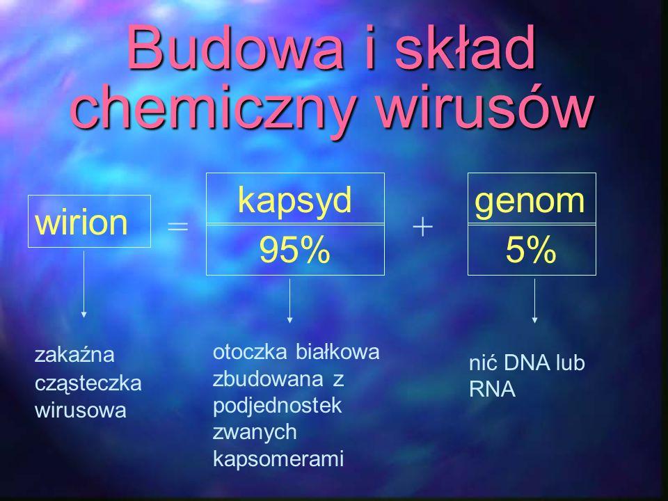 Budowa i skład chemiczny wirusów
