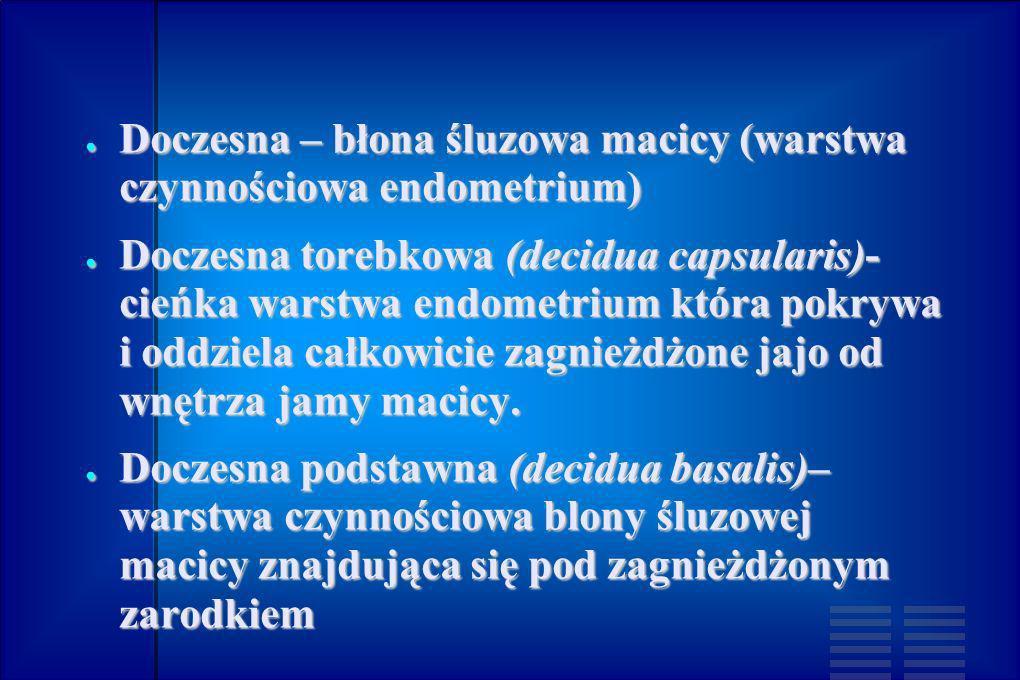 Doczesna – błona śluzowa macicy (warstwa czynnościowa endometrium)