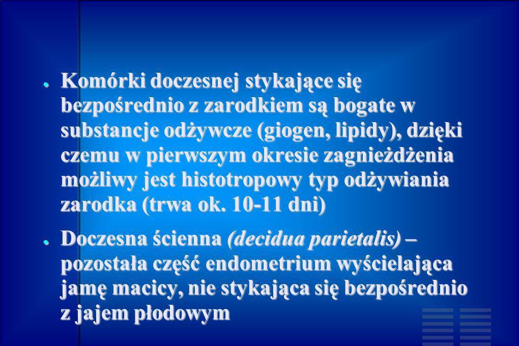 Komórki doczesnej stykające się bezpośrednio z zarodkiem są bogate w substancje odżywcze (giogen, lipidy), dzięki czemu w pierwszym okresie zagnieżdżenia możliwy jest histotropowy typ odżywiania zarodka (trwa ok. 10-11 dni)