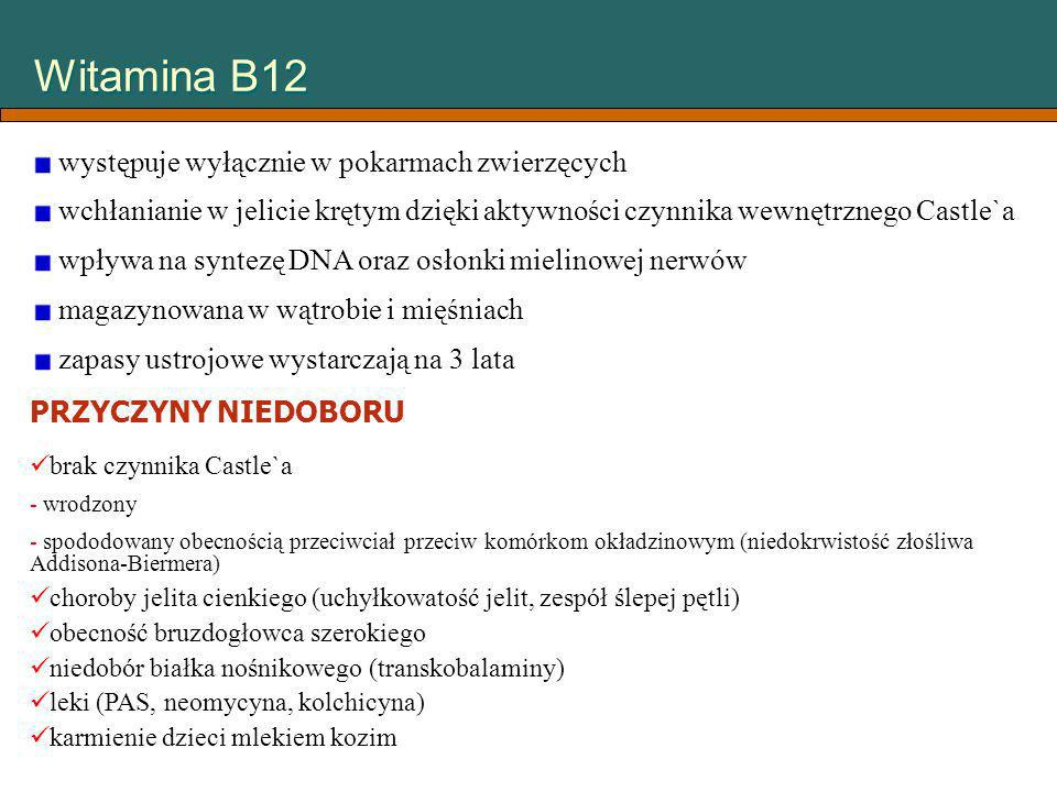Witamina B12 występuje wyłącznie w pokarmach zwierzęcych