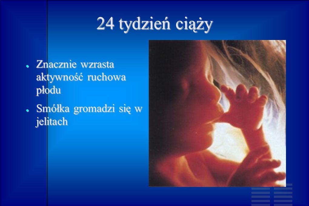 24 tydzień ciąży Znacznie wzrasta aktywność ruchowa płodu