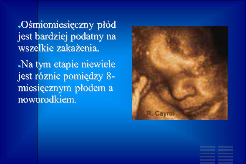 Ośmiomiesięczny płód jest bardziej podatny na wszelkie zakażenia.