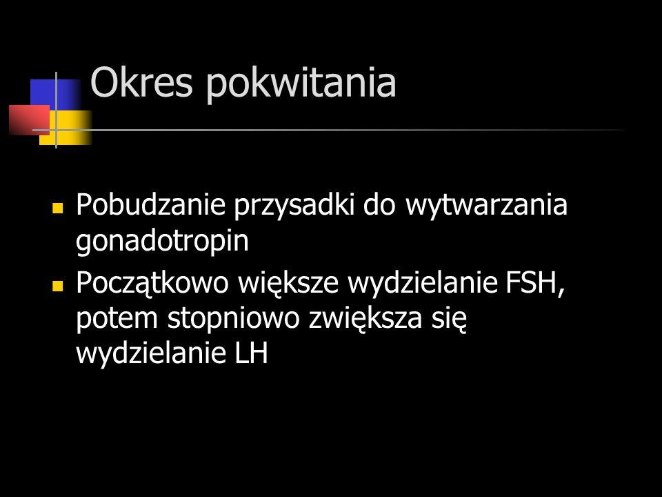 Okres pokwitania Pobudzanie przysadki do wytwarzania gonadotropin