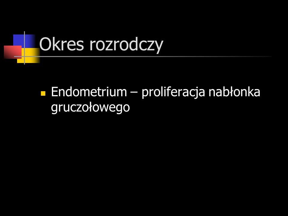 Okres rozrodczy Endometrium – proliferacja nabłonka gruczołowego