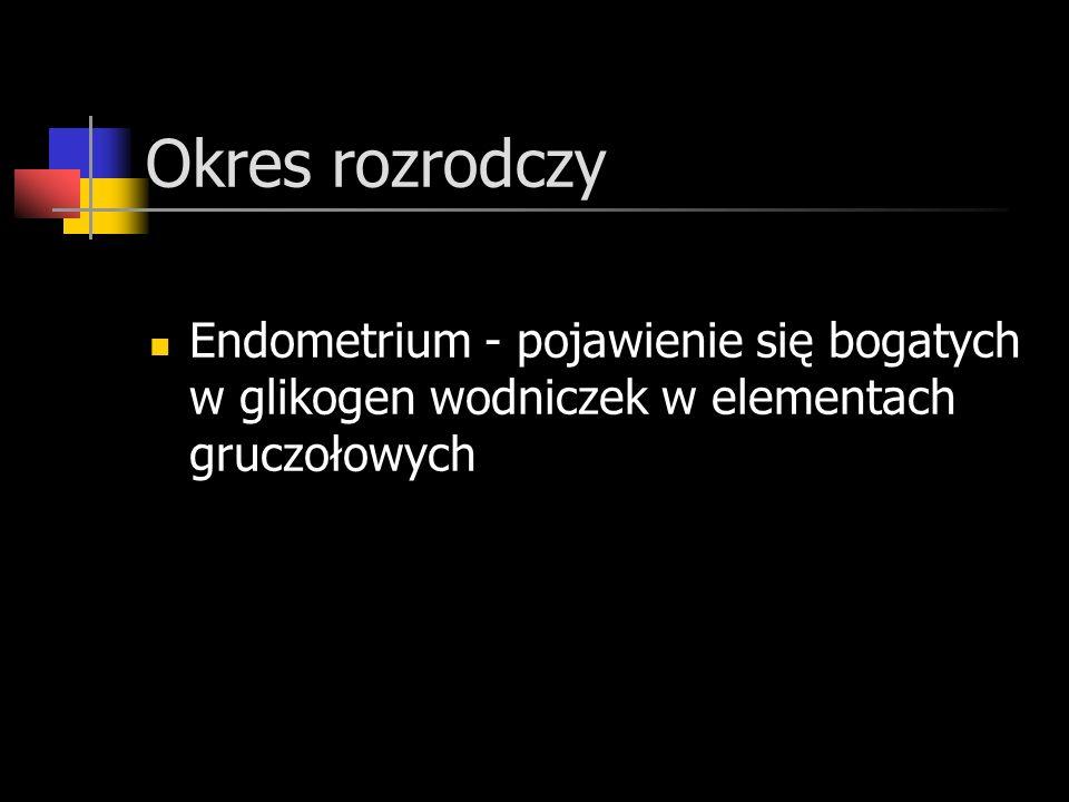 Okres rozrodczy Endometrium - pojawienie się bogatych w glikogen wodniczek w elementach gruczołowych.