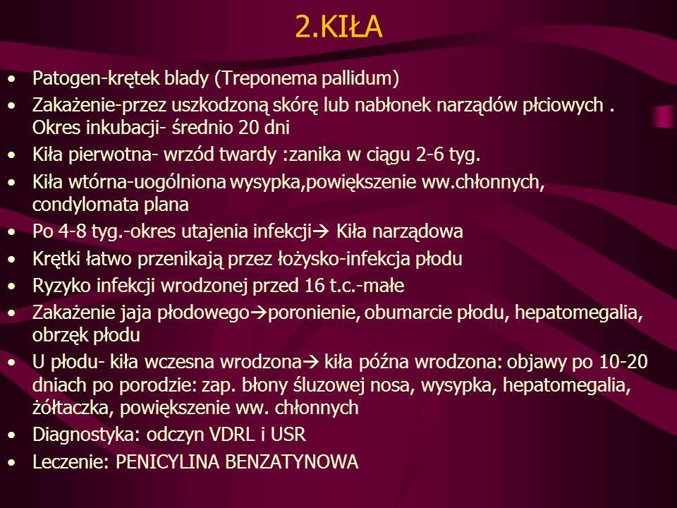 2.KIŁA Patogen-krętek blady (Treponema pallidum)