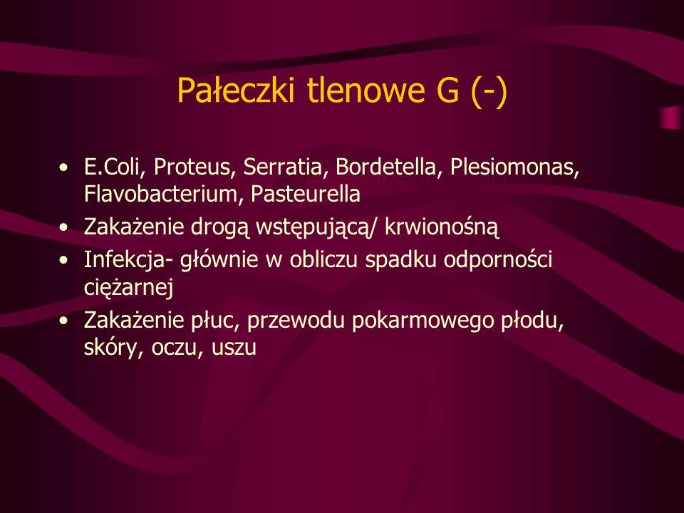 Pałeczki tlenowe G (-) E.Coli, Proteus, Serratia, Bordetella, Plesiomonas, Flavobacterium, Pasteurella.