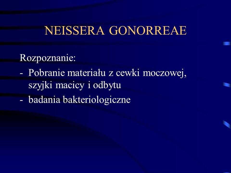 NEISSERA GONORREAE Rozpoznanie: