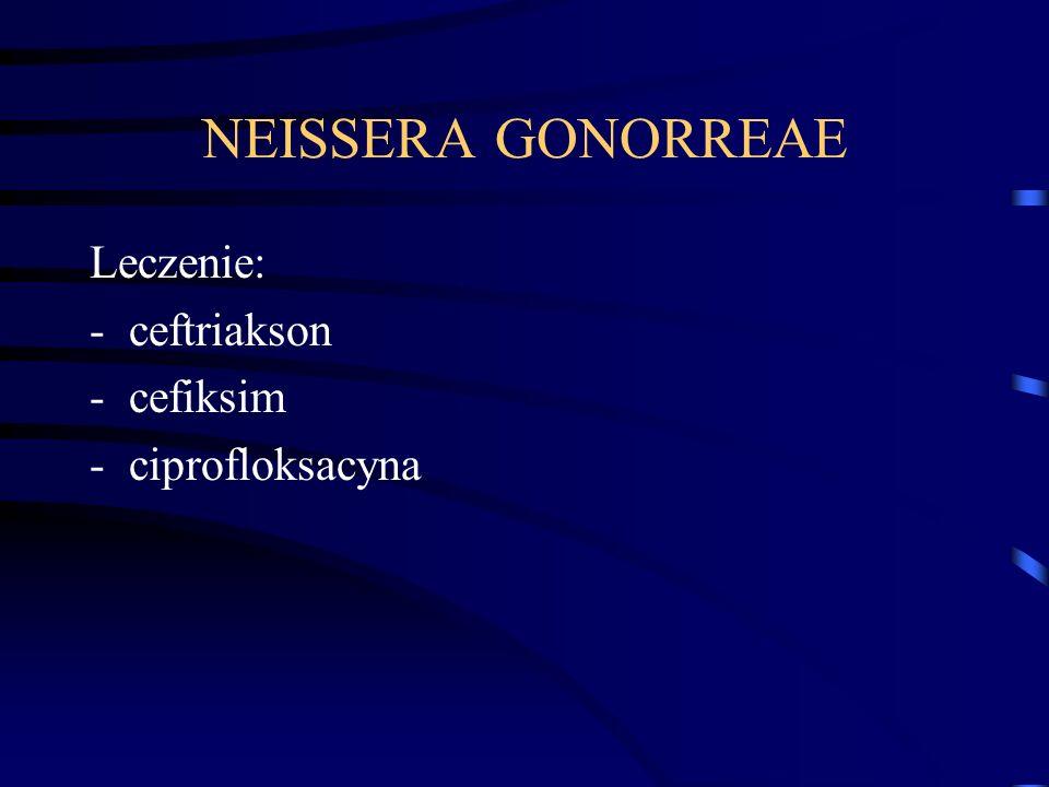 NEISSERA GONORREAE Leczenie: ceftriakson cefiksim ciprofloksacyna
