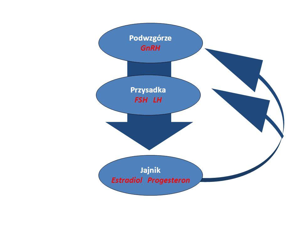 Estradiol Progesteron