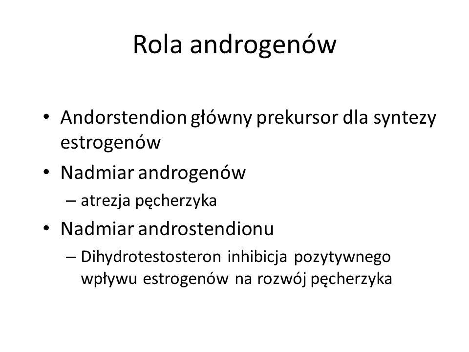 Rola androgenów Andorstendion główny prekursor dla syntezy estrogenów