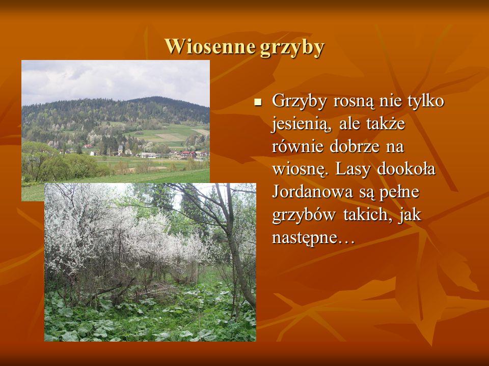 Wiosenne grzyby Grzyby rosną nie tylko jesienią, ale także równie dobrze na wiosnę.