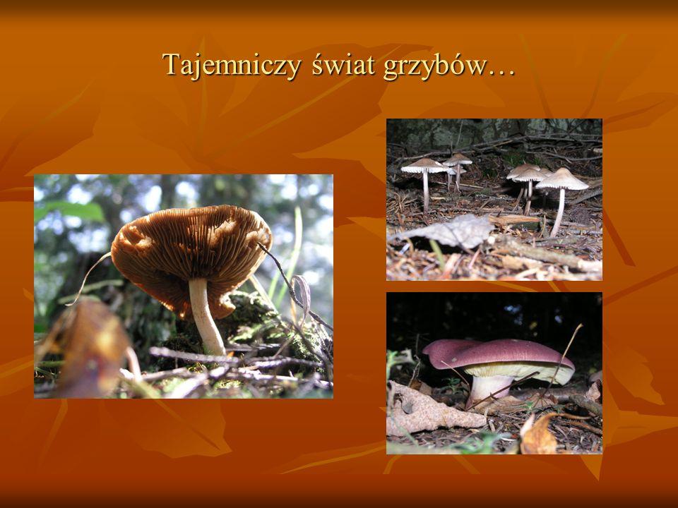 Tajemniczy świat grzybów…