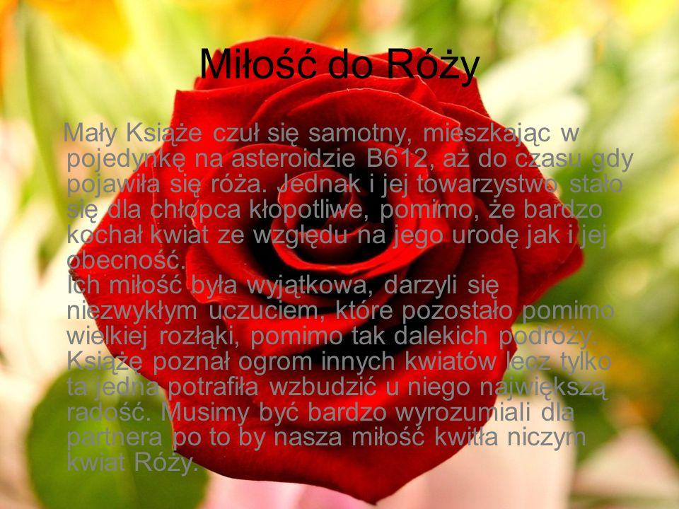 Miłość do Róży