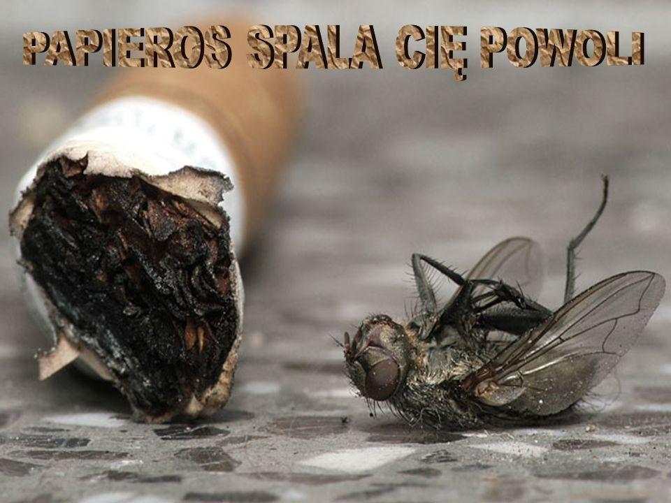 PAPIEROS SPALA CIĘ POWOLI