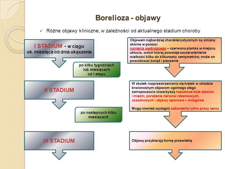 Borelioza - objawy I STADIUM - w ciągu ok. miesiąca od dnia ukąszenia