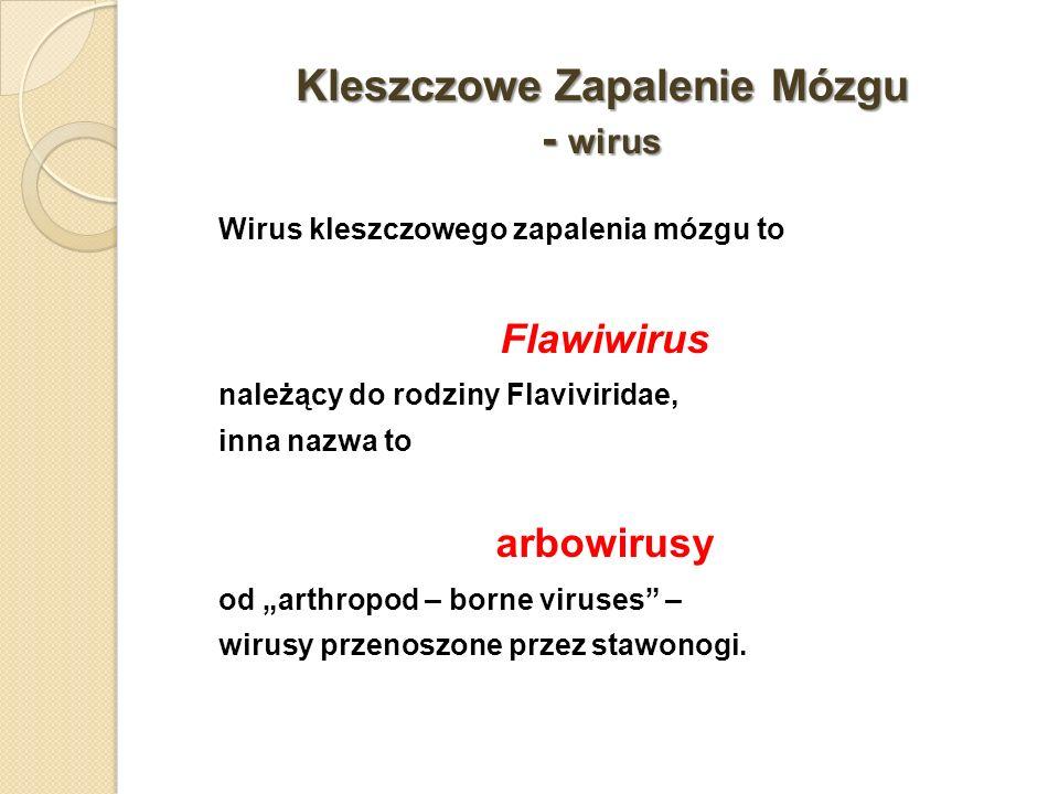 Kleszczowe Zapalenie Mózgu - wirus