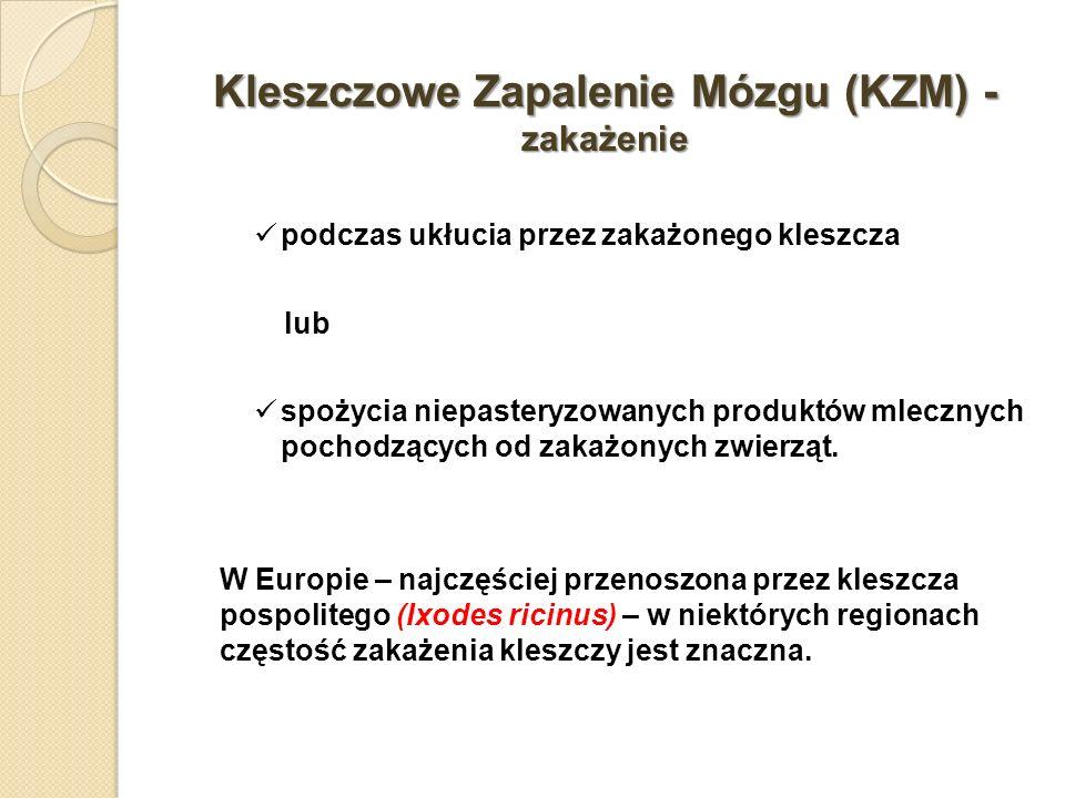 Kleszczowe Zapalenie Mózgu (KZM) - zakażenie