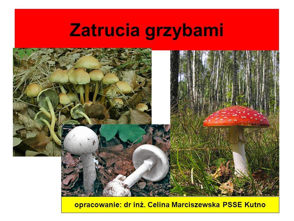 opracowanie: dr inż. Celina Marciszewska PSSE Kutno