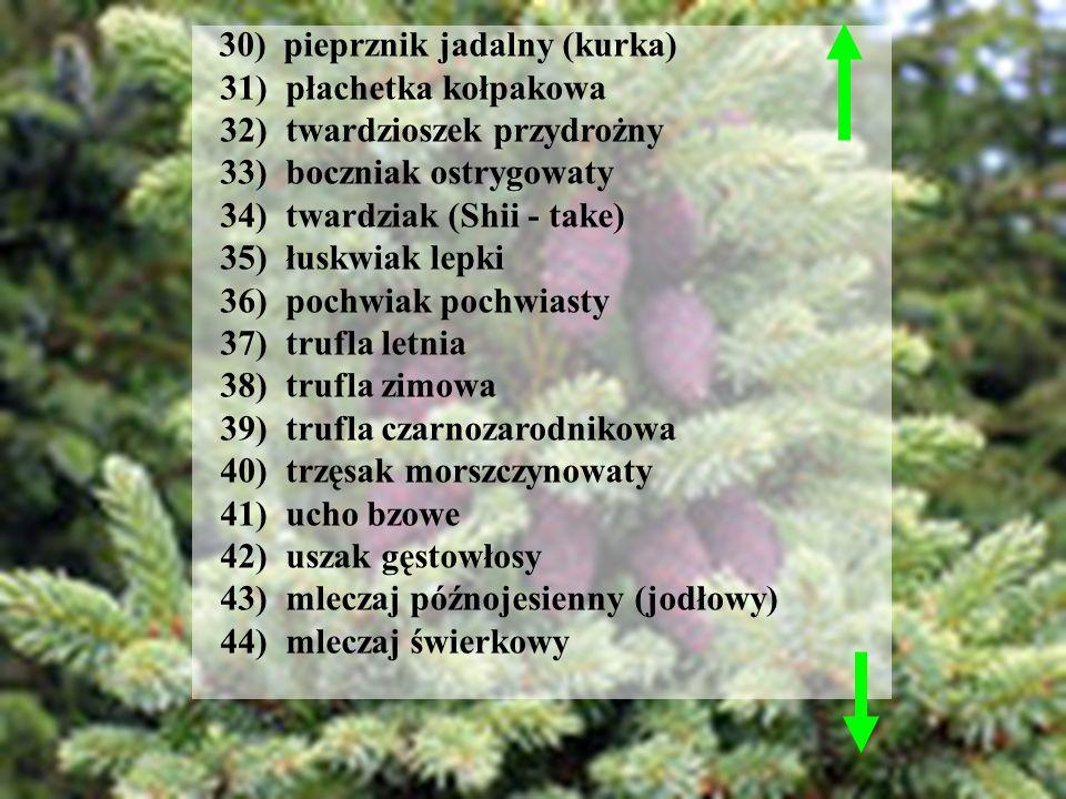 32) twardzioszek przydrożny 33) boczniak ostrygowaty