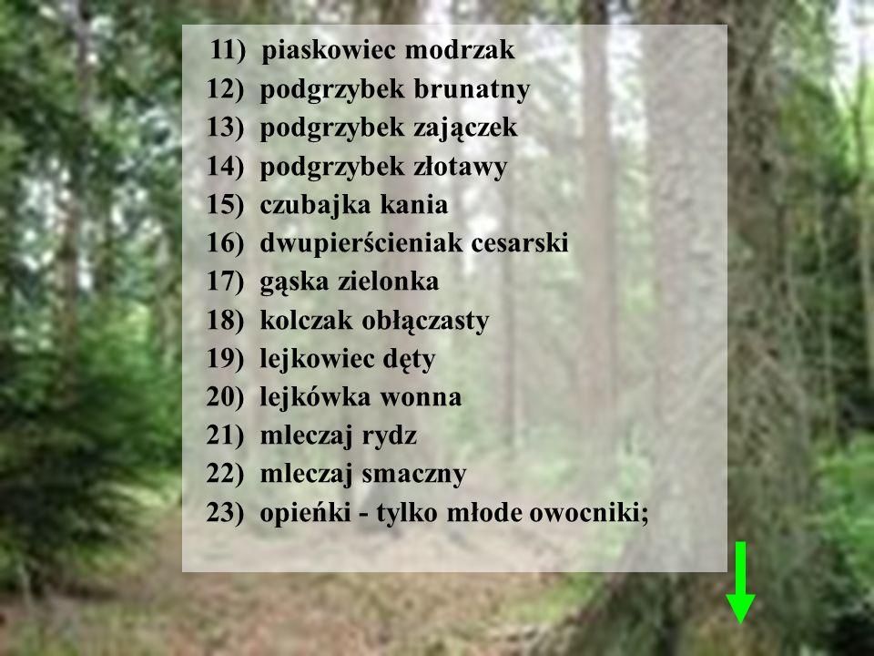 11) piaskowiec modrzak 12) podgrzybek brunatny 13) podgrzybek zajączek